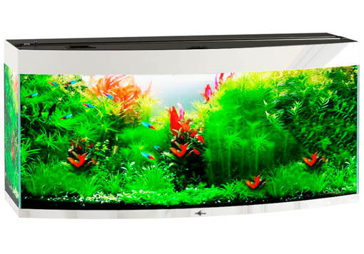 Biodesign Crystal Panoramic 310